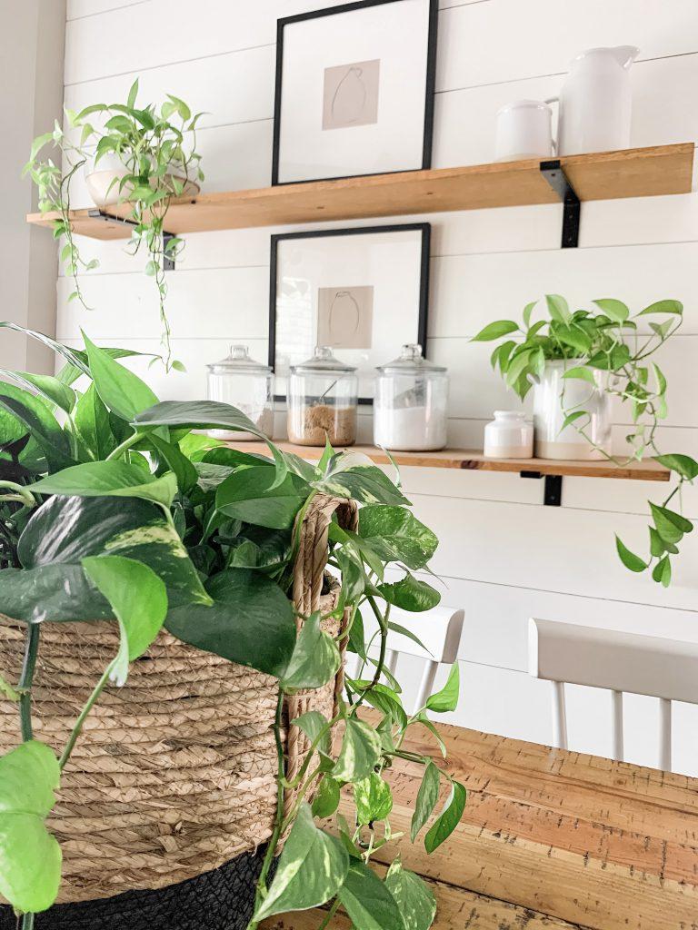 plants on kitchen shelves